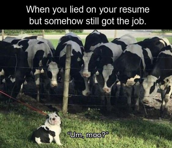 animals lied on their resume but still got the job memes can has cheezburger when you Resume When You Lied On Your Resume Sheepdog
