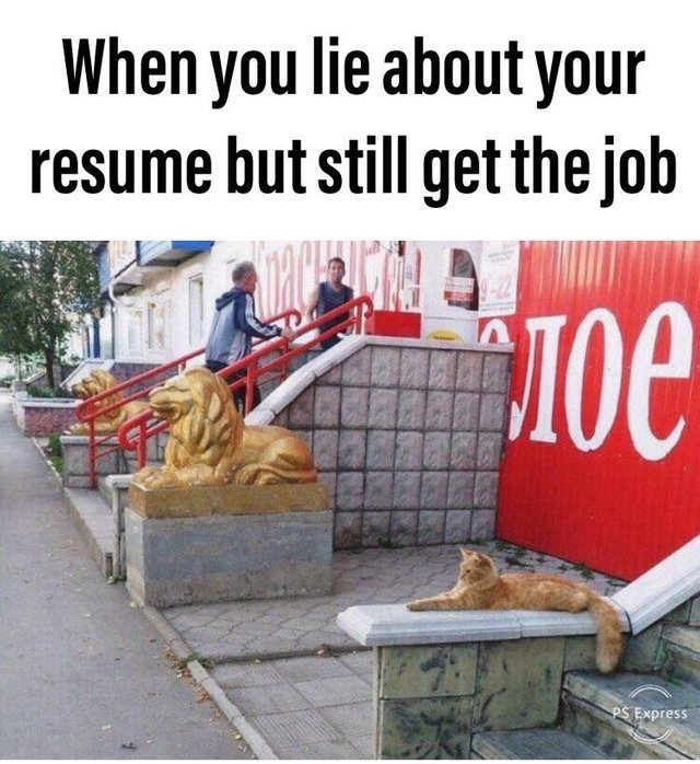 lied on your resume meme best examples when you sheepdog management fresher builder Resume When You Lied On Your Resume Sheepdog