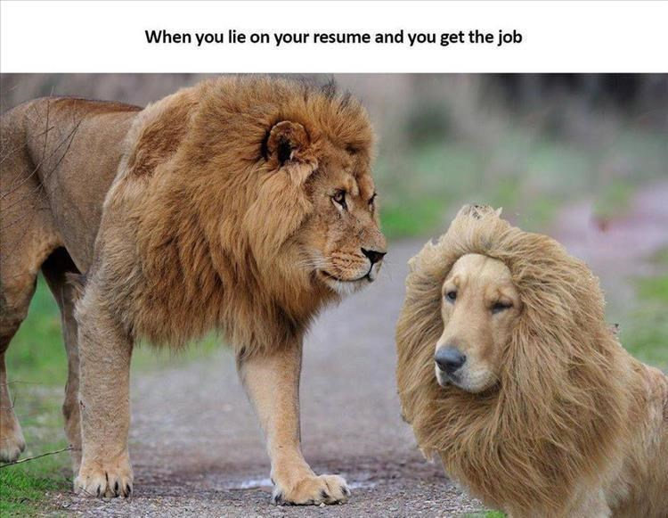 animals lied on their resume but still got the job memes can has cheezburger you lie Resume Can You Lie On A Resume